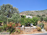 Kostos Paros   Cycladen   Griekenland foto 16