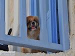 Naoussa Paros | Cycladen | Griekenland foto 30