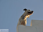 Parikia Paros | Cycladen | Griekenland foto 28 - Foto van De Griekse Gids
